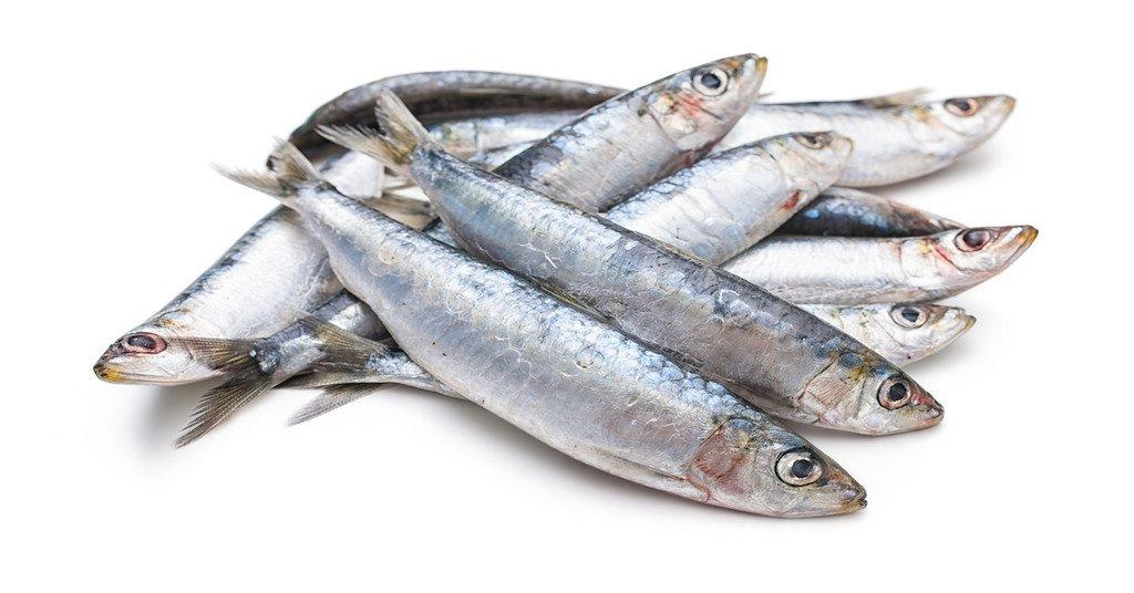sardinky mäso